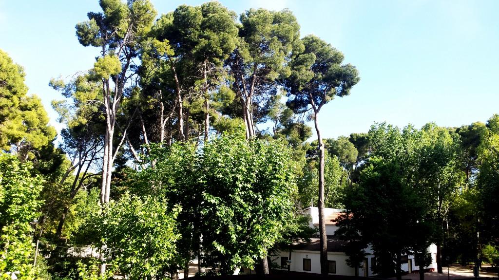 Parque_Abelardo_Sánchez._Colegio_Público_San_Fernando._Albacete